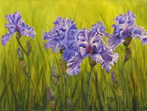 Iris by vivian-sathre